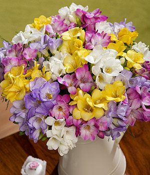 ../Send the sweet-smelling fragrance of 30 long-stemmed Dutch Freesia in mixed colours with greenery.