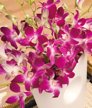 ../An exotic bouquet of 10 delicate long stemmed Dendrobium Orchids in vibrant Fuschia colour.