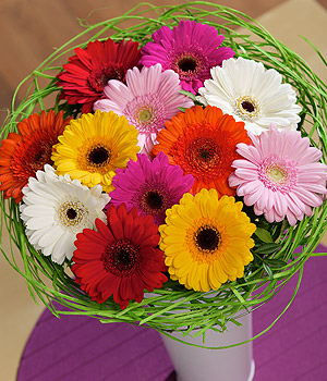 ../A simply gorgeous selection of striking Germini Daisies in mixed colours framed with green rattan.
